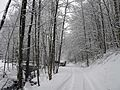 Wanderweg im Wässernachtal im Winter (2).JPG