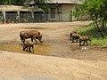 Warthogs (393888143).jpg