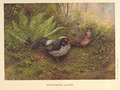 White-crested Kaleege by George Edward Lodge.png