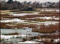 Wildlife ^ Wetlands Centre, Barnes, W. London. - panoramio (1).jpg
