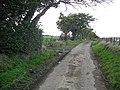 Wind sculpted trees, Redbrae - geograph.org.uk - 1593418.jpg