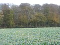 Winter greens in a roadside field - geograph.org.uk - 1588839.jpg