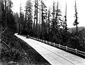 Wooded road, Washington (4669579741).jpg