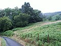 Woodland and bracken, Llyfnant Valley - geograph.org.uk - 34391.jpg