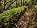 Woodrush on field boundary near Woody Bay - geograph.org.uk - 1286151.jpg