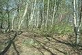 Woodside Quarry, Ireland Wood, Leeds. W.Yorkshire. (2).jpg