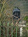 Woolley Methodist Chapel - Overgrown Sign - geograph.org.uk - 314176.jpg