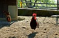 Yo Punk Don T Check Out My Chicks (67770737).jpeg