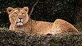 Zürich Zoo DSC 6127 2 (13364447165).jpg