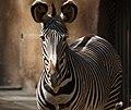Zebra (3336302261).jpg