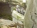 Zoo am Meer 2008 PD 41.JPG