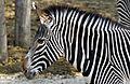 Zoo de Vincennes, Paris, France April 2014.jpg