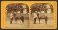 """Little Phil"" (showing a man with small horse), from Robert N. Dennis collection of stereoscopic views.png"