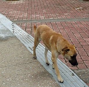 The above picture depicts stray dogs at Vrilissia.