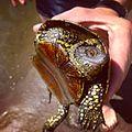 Ахтубинская черепаха.jpg