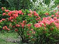 Ботанічний сад ім. І.Фоміна IMG 9199.jpg