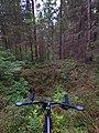 Воронка в лесу ППИ 2.jpg