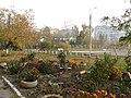 Во дворе осень. Конец октября 2011 г. - panoramio.jpg