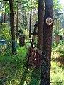 Время остановилось.Кладбище в Шнитках - panoramio.jpg