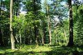 Высокаўскі парк - panoramio.jpg