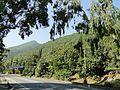 Гагра. Проспект Нартаа. - panoramio (3).jpg