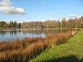 Гатчинский парк. Белое озеро, чайки02.jpg