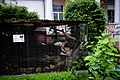 Дендропарк Качка літає вольєром DSC 0360.jpg