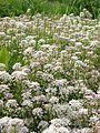 Донецкий ботанический сад 027.jpg