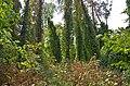 Заказник лісовий Ворзельський 002.jpg
