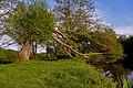 Лівий берег Бугу в межах парку «Середнє Побужжя» P1210617.jpg