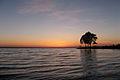Озеро Плещеево.jpg