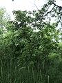 Парк шума Гази Баба во мај (100).JPG