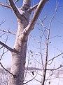 Трепетлики, зима.jpg