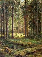 Хвойный лес. Солнечный день