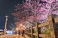 【台中。泰安景點】泰安櫻花季 (32302170644).jpg