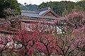 普光寺の梅 - panoramio (2).jpg