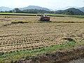 稲刈り - panoramio.jpg