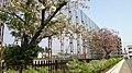 茨城大学 - panoramio (1).jpg