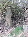 -2019-01-01 Trig point, Beacon Hill, Trimingham (4).JPG