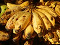 0495Common houseflies eating bananas in the Philippines 29.jpg