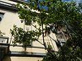 0687jfNational Waterworks Sewerage Authority Courts Buildings Manilafvf 12.jpg