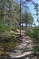 0Drents-Friese Wold - Path in the woods.jpg
