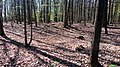 12 Grabhügelgruppe im Waldstück Hainbach.jpg