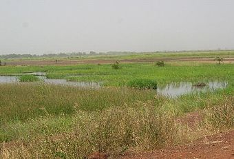 1917260-near the Gambia River-The Gambia.jpg