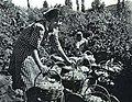 1964-02 1964年 吐鲁番葡萄园2.jpg