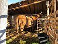 20121201Krippe Hockenheim2.jpg