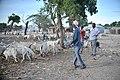 2013 04 14 Bakara Animal Market J.jpg (8653581595).jpg
