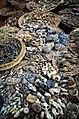 2013 Dead organisms in Benin.jpg