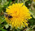 2014-04-01 12-48-01 abeille.jpg