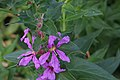 2015.09.05 11.17.41 IMG 0346 - Flickr - andrey zharkikh.jpg
